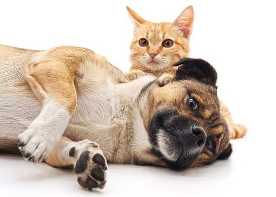 Pet Boarding Service Rates In Phoenix Az Canine Country Club Az