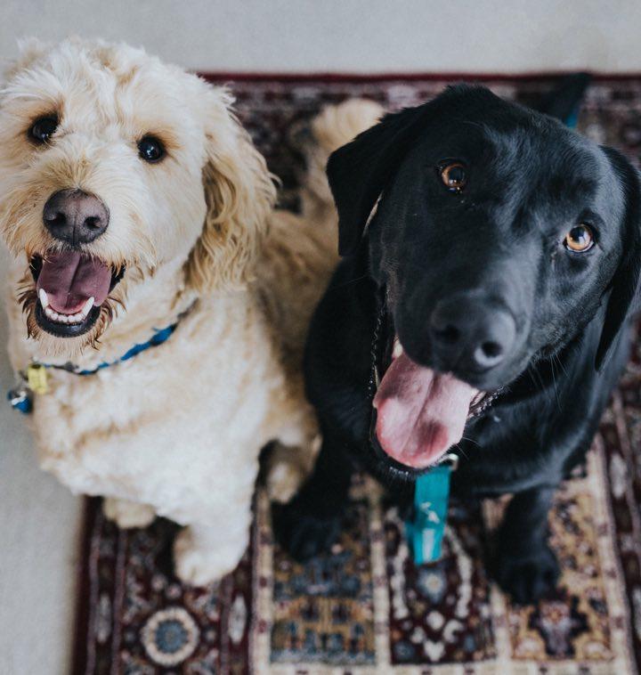 boarding-happy-dogs