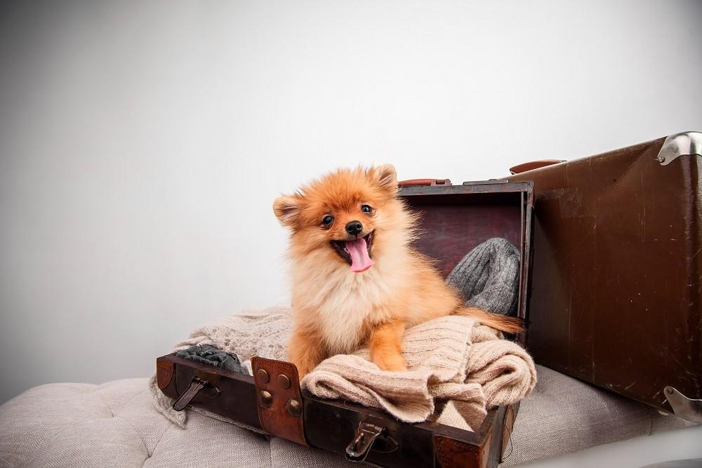 dog boarding phoenix