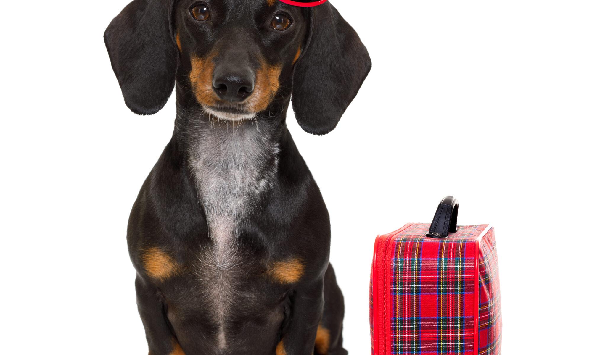 dog-boarding-vs-dog-daycare