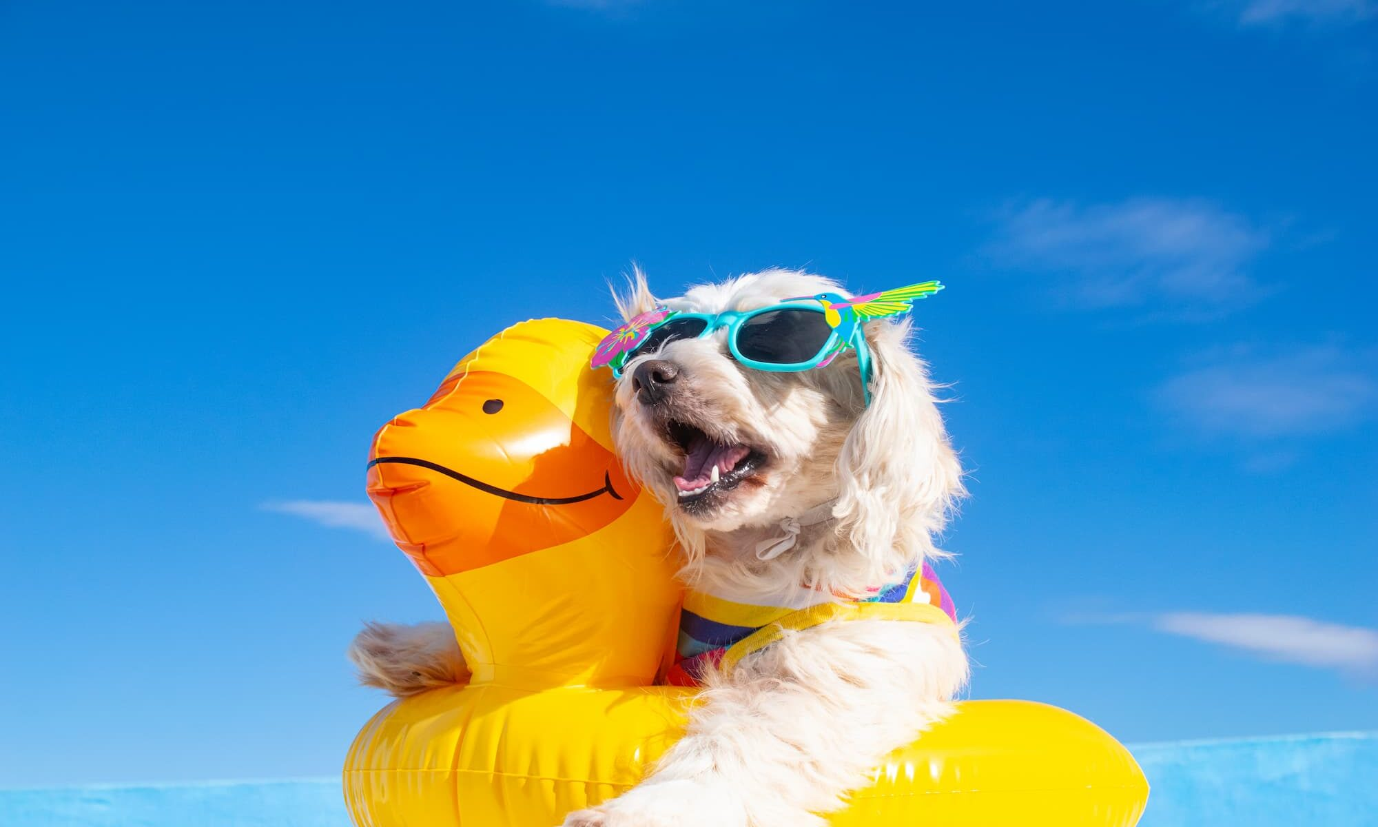 Summer Tips for Pets in Arizona