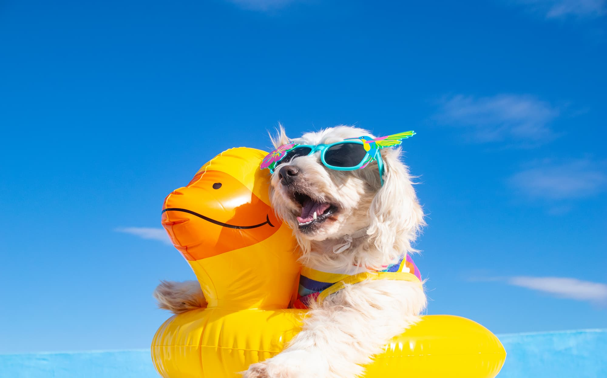 dog against skyline wearing sunglasses and a pool floatie