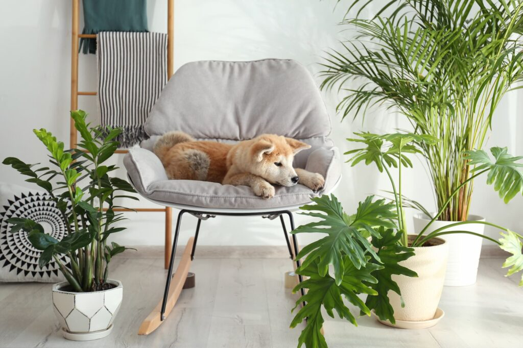 puppy sitting on furniture near house plants