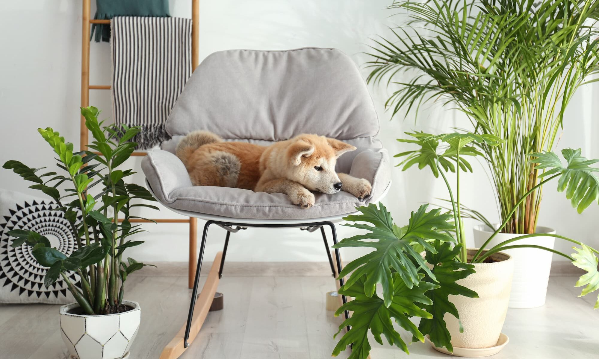 Pet Safe Plants and What Plants are Safe for Dogs
